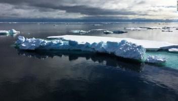 calentamiento global hielo artico virus especies moquillo