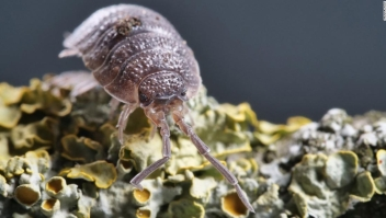 Apocalipsis de insectos. Qué puedes hacer