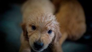 rabia mexico perros ops oms salud