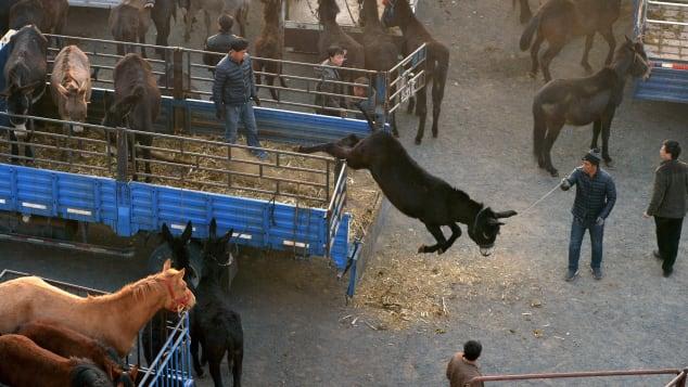 Carne de burro