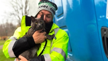 Un microchip hizo que este camionero se reencontrara con su gato