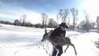 Rescatan a un ciervo de un lago congelado