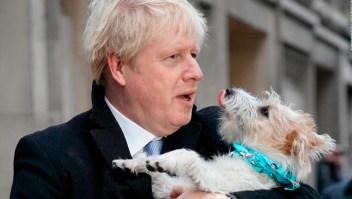 Cientos de británicos cuelgan fotos de sus perros en colegios electorales