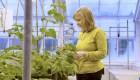 Editan ADN de plantas para adaptarlas al cambio climático