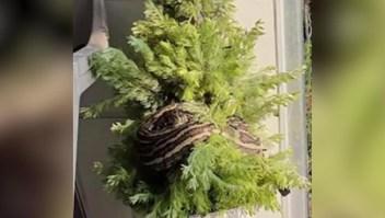 Una pitón se muda a un árbol de Navidad