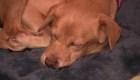 Familia adopta un cachorro callejero que entró a su casa