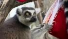La Navidad llegó al Zoológico de Londres