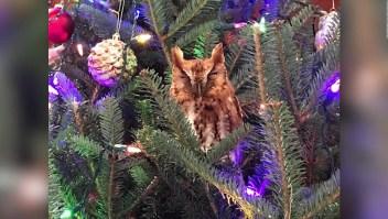 Hallan un búho en el árbol de Navidad de una familia en Atlanta