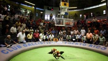 Puerto Rico intenta continuar con las peleas de gallos