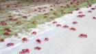 """""""Barredores de cangrejo"""" para navegar entre los enjambres"""