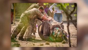 Militares británicos ayudan a transportar a animales en peligro de extinción