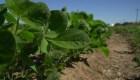 La incertidumbre del sector agrícola argentino