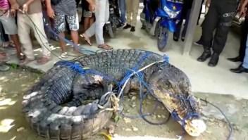 Creen que este cocodrilo mató a dos personas