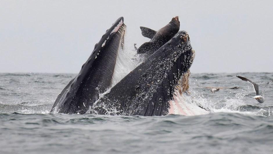 Ballena león marino