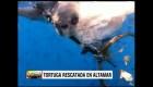 Rescatan a tortuga de la muerte