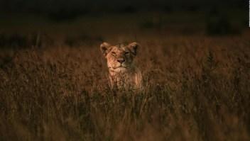 La importancia de los animales para la supervivencia humana