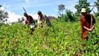 Ashaninka: ecologistas por naturaleza
