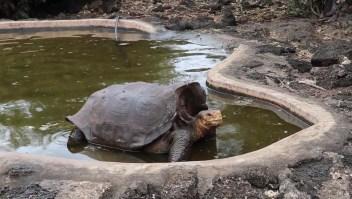 Promiscua tortuga salva su especie