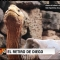 La tortuga Playboy de las Galápagos se retira