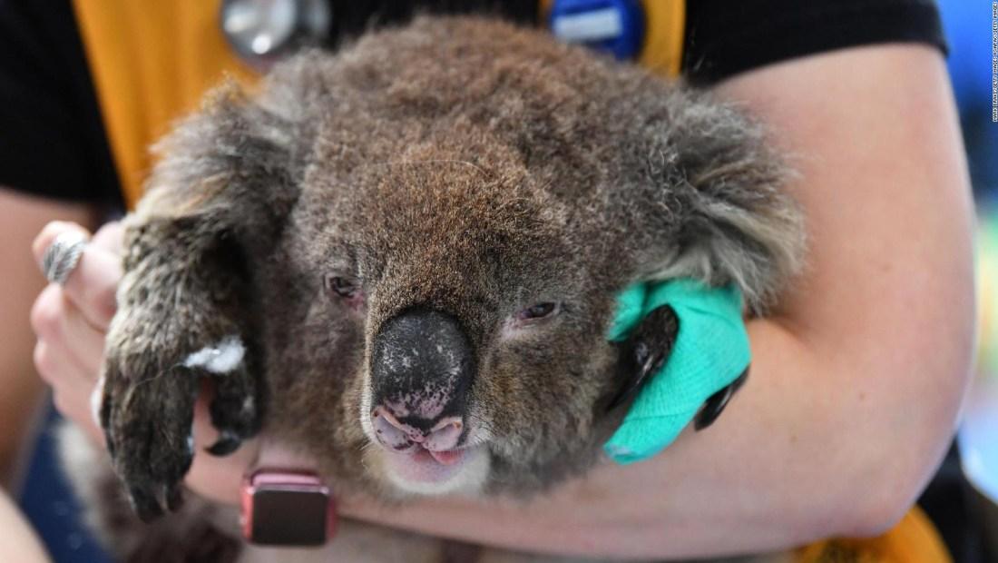 Australianos se unen para salvar sus icónicos animales