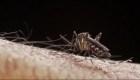 Latinoamérica, en alerta por epidemia de dengue