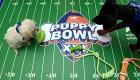Conoce al Puppy Bowl, el Super Bowl de perros