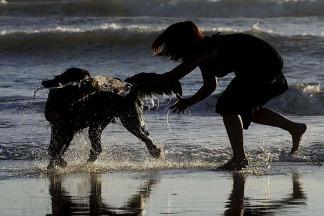 ¿Cómo es la primera playa para perros en Argentina? (Foto de Télam).