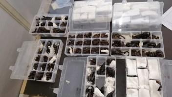 Contrabando escorpiones China Sri Lanka