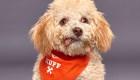 Cuenta regresiva para el Puppy Bowl 2020