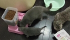 Mascotas abandonadas en Wuhan son alimentadas por rescatistas