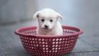 Coors Light pagará los gastos de adopción de tu mascota