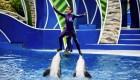 Seaworld eliminará surfear sobre los delfines