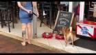 Los comercios apuntan a los animales