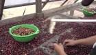 Inauguran planta de café en Honduras