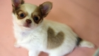 ¿Regalos de San Valentín para mascotas?