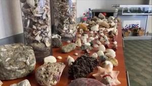 Costa Rica busca que turistas no se lleven objetos marinos