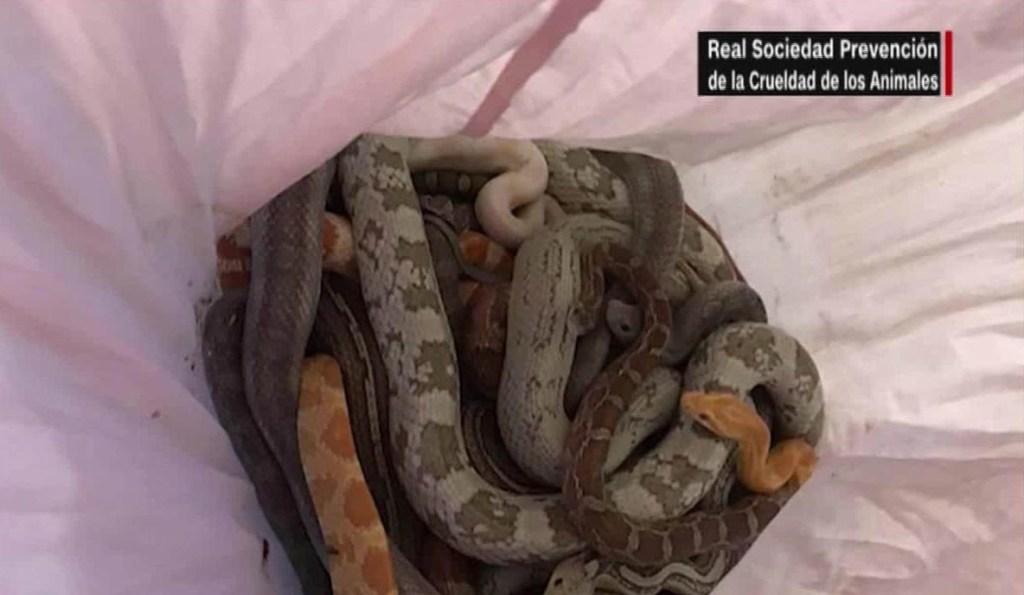 Hallan serpientes en estación de bomberos en Inglaterra