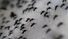 5 cosas para hoy: Paraguay en alerta por dengue y más