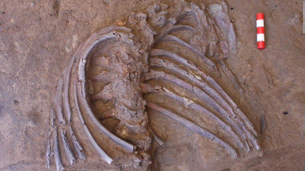 Esqueleto de 70.000 años revela información sobre ritos