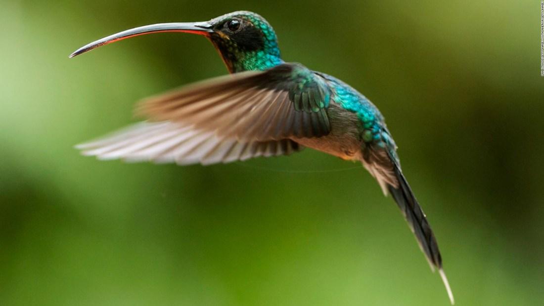 México: jardines urbanos para la conservación del colibrí