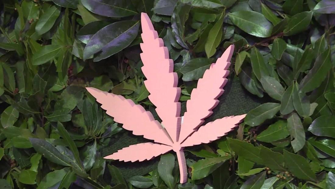 Iniciativa para regular la marihuana aún está muy verde