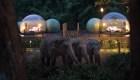 La nueva experiencia para convivir con elefantes en Tailandia
