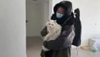 ¿Pueden las mascotas contagiarnos de coronavirus?