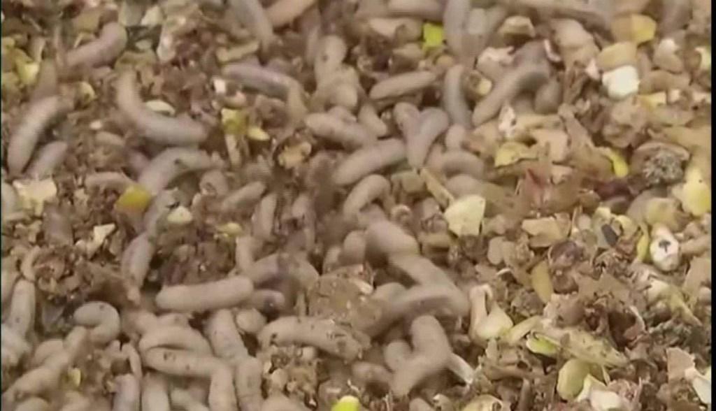 Mantequilla de insectos para repostería