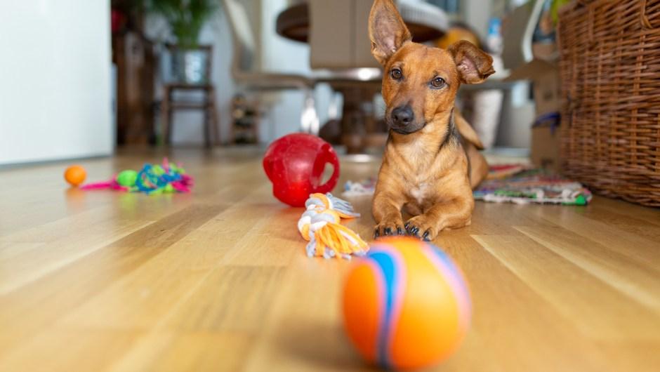 Juguetes para mascotas