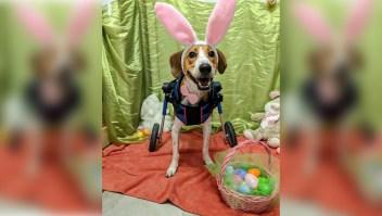 Teniente Dan, un perro de dos patas indomable