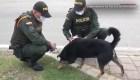 Policías alimentan a perros callejeros durante la cuarentena