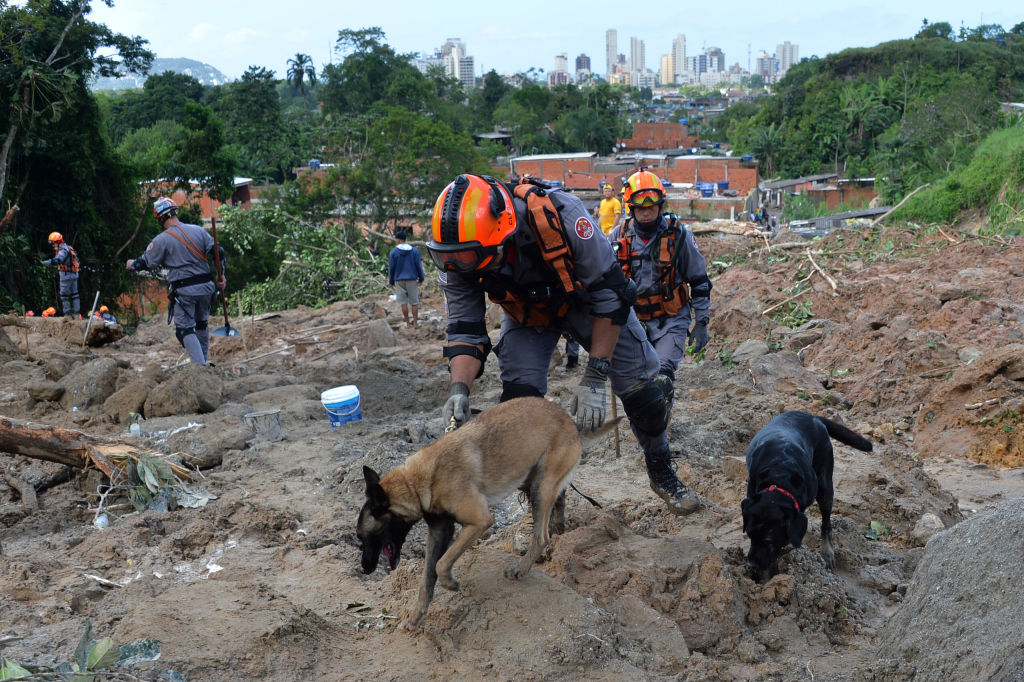 Firefighters with sniffer dogs search for victims of a landslide triggered by torrential rains during the week-end, in Barreira do Joao Guarda, a favela in Guaruja, 95 km from Sao Paulo, Brazil, on March 4, 2020. - More than 20 people have been killed in torrential rain that hit the Brazilian states of Sao Paulo and Rio de Janeiro in the past days, triggering flash floods and destroying houses, authorities said. (Photo by Nelson ALMEIDA / AFP) (Photo by NELSON ALMEIDA/AFP via Getty Images)