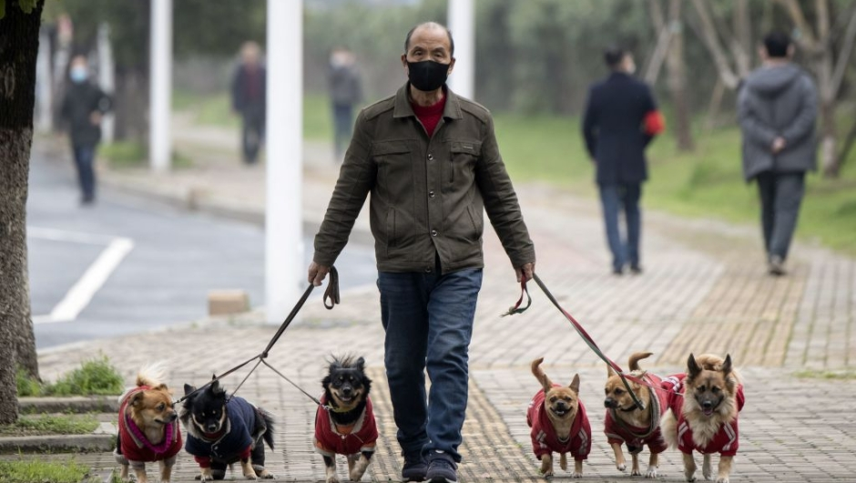 TOPSHOT - A man wearing a face mask walks his dogs along a street in Jiujiang in China's central Jiangxi province on March 7, 2020. - China on March 7 reported 28 new deaths from the COVID-19 coronavirus outbreak, bringing the nationwide toll to 3,070. (Photo by NOEL CELIS / AFP) (Photo by NOEL CELIS/AFP via Getty Images)