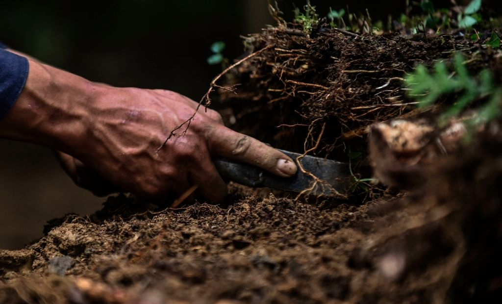 """A deminer digs Looking for mines at a mine field at the Orejon sector in the municipality of Briceno, Antioquia Department, Colombia, on November 22, 2017. Colombia's landmark peace deal with Marxist FARC rebels was supposed to mean peace for all but it has made little difference to indigenous and Afro-Colombian minorities, Amnesty International said on November 22, 2017. Although the agreement between the Colombian government and the FARC was signed, armed conflict is still very much the reality for millions across the country,"""" said Salil Shetty, Secretary General at Amnesty International. / AFP PHOTO / JOAQUIN SARMIENTO (Photo credit should read JOAQUIN SARMIENTO/AFP via Getty Images)"""